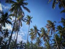 Palmas de coco no por do sol fotos de stock
