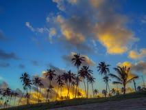 Palmas de coco no por do sol Fotos de Stock Royalty Free