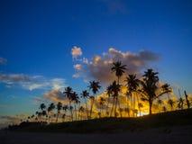 Palmas de coco no por do sol Fotografia de Stock