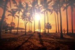 Palmas de coco tropicais fotos de stock