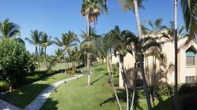 Palmas de coco y condominios de las vacaciones Imagen de archivo libre de regalías