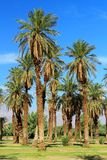 Palmas de data na angra da fornalha, parque nacional de Vale da Morte, Califórnia imagem de stock royalty free