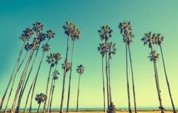 Palmas de la altura de California en el fondo del cielo azul Imágenes de archivo libres de regalías