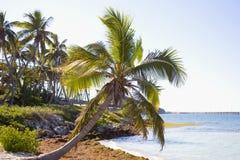 Palmas de la isla Foto de archivo libre de regalías