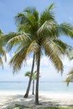 Palmas de la playa de la ciudad de Nassau Fotos de archivo libres de regalías