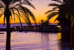 Palmas de la puesta del sol Foto de archivo