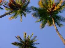 Palmas de los Cocos Foto de archivo