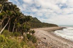 Palmas de Nikau que crecen a lo largo de costa oeste fotos de archivo libres de regalías