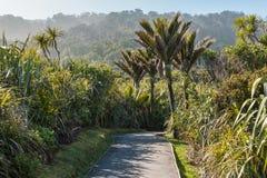 Palmas de Nikau que crescem na floresta úmida tropical fotos de stock royalty free