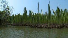 Palmas de Nipa mantidas no rio de Kangy, Myanmar vídeos de arquivo