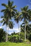 Palmas de Palawan Foto de archivo libre de regalías
