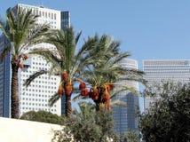 Palmas de Tel Aviv e arranha-céus 2012 Fotografia de Stock