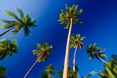 Palmas del cielo azul Foto de archivo