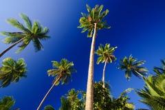 Palmas del cielo azul Foto de archivo libre de regalías