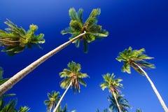Palmas del cielo azul Fotos de archivo libres de regalías
