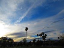 Palmas del desierto Fotografía de archivo