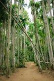 Palmas del túnel en el jardín de la palma, Tailandia Foto de archivo