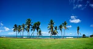 Palmas delanteras de la playa Foto de archivo