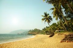Palmas do Oceano Índico e de coco fotos de stock
