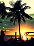 Palmas do por do sol Fotos de Stock Royalty Free