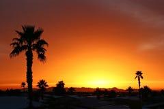 Palmas do por do sol do sudoeste fotografia de stock royalty free