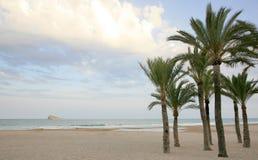 Palmas e BLANCA da costela da praia em Benidorm Spain Fotografia de Stock Royalty Free