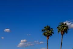 Palmas e céu Foto de Stock