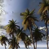 Palmas e céu Fotografia de Stock