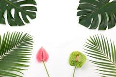 Palmas e flores tropicais fotografia de stock royalty free