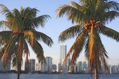 Palmas e skyline de Miami Foto de Stock