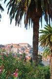 Palmas em Dubrovnik Foto de Stock