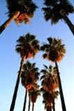 Palmas em Hollywood Foto de Stock