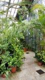 Palmas em Sofia Botanical Garden, Bulgária imagem de stock royalty free