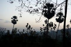 Palmas em uma floresta escura imagem de stock royalty free