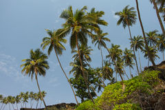 Palmas en el Cabo de Rama Beach, Goa Foto de archivo libre de regalías