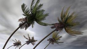 Palmas en el huracán Fotografía de archivo libre de regalías