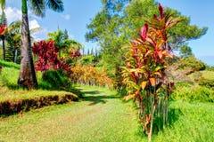 Palmas en jardín tropical Jardín de Eden, Maui Hawaii Fotografía de archivo libre de regalías