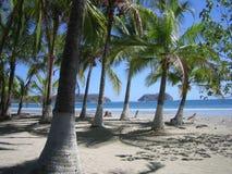 Palmas en la playa Imagenes de archivo