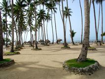 Palmas en la playa Foto de archivo