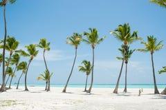 Palmas en la playa foto de archivo libre de regalías