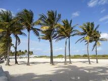 Palmas en la playa Fotografía de archivo libre de regalías