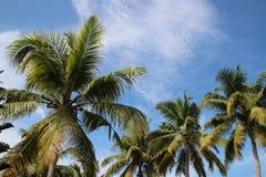Palmas en la playa Imagen de archivo