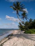 Palmas en la playa de la isla Imagen de archivo libre de regalías