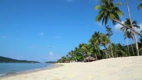 Palmas en la playa de una isla hermosa almacen de metraje de vídeo