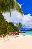 Palmas en la playa tropical Fotos de archivo