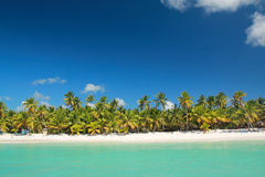 Palmas en la playa tropical Imagen de archivo