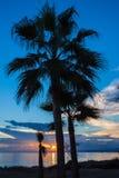 Palmas en la puesta del sol Imagenes de archivo