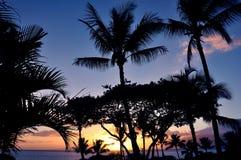 Palmas en la puesta del sol en Maui Fotos de archivo libres de regalías