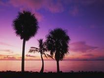 Palmas en la salida del sol Fotografía de archivo libre de regalías