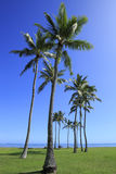 Palmas en parque de la playa Fotografía de archivo libre de regalías